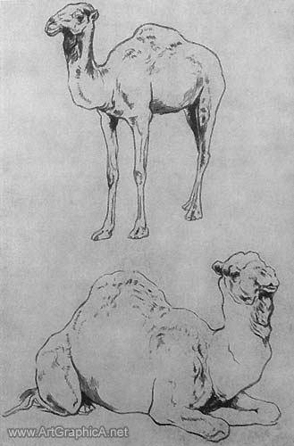 camel studies, drawing