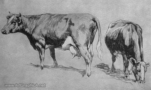 how to draw cows