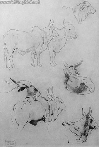 indian cattle sketches