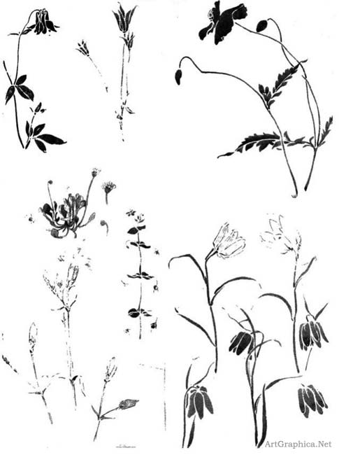 plant flower sketches