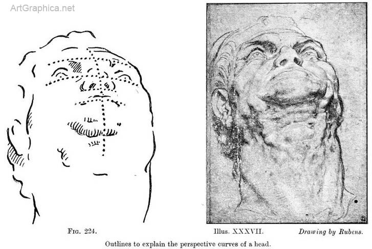 perspective of the human head