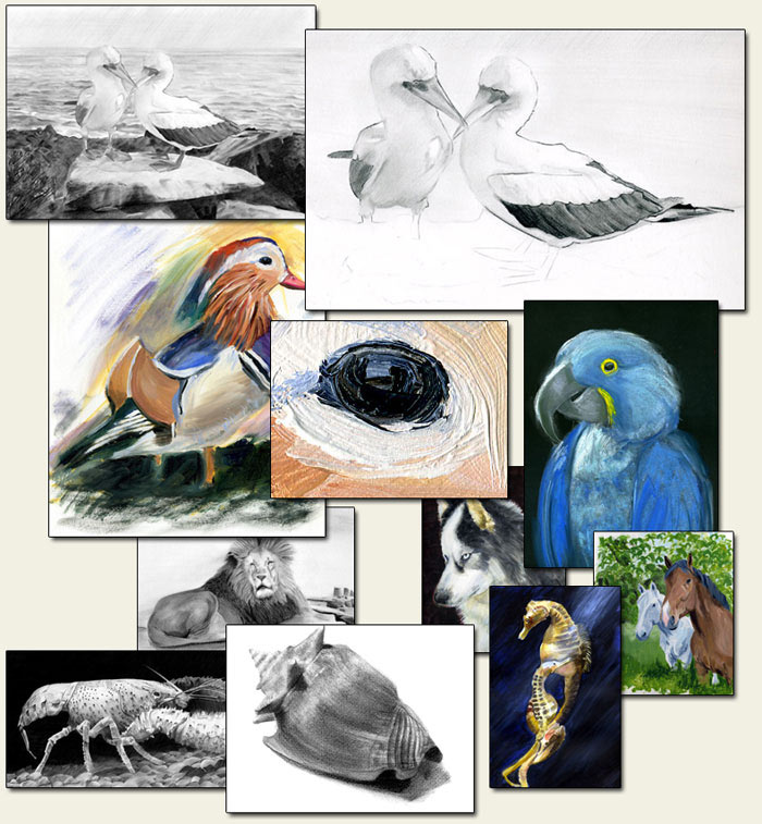 collection of wildlife paintings
