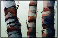 watercolour trees tutorial, birch trees