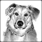 how to draw a dog, graphite art