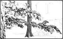 drawing foliage, tree leaves, pen and ink demo
