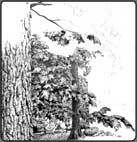 drawing trees, learn to draw trees, tree art lesson