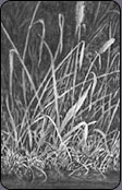 drawing grass, negative drawing, mike sibley