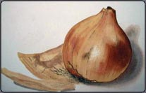 how to paint an onion
