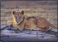 eric wilson, lion cub