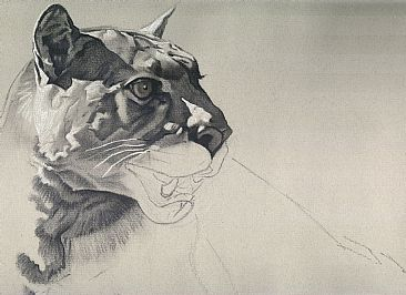 charcoal drawing, free art instruction, wildlife art tutorial, puma, learn to draw