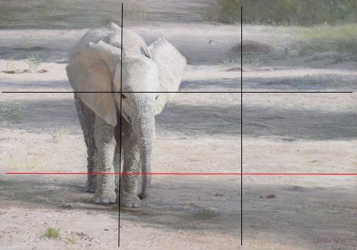 dicas de composição, arte dos animais selvagens