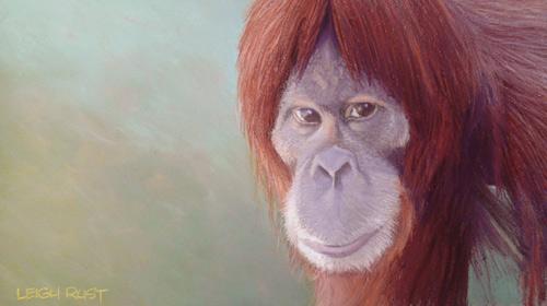 arte pastel orangotango