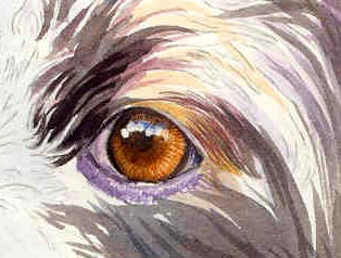 painting a dog's eye