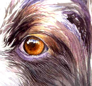 dog fur and eye