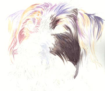 watercolour, dog fur underpainting