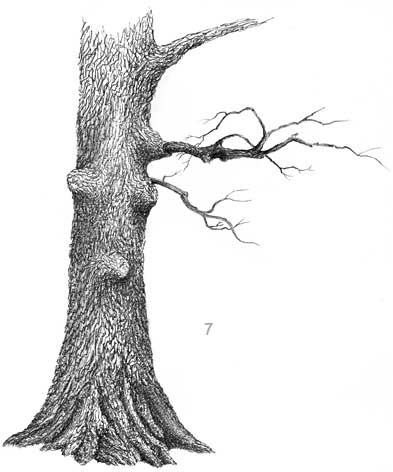 oak tree, pen and ink tree, landscape in ink, ink demo
