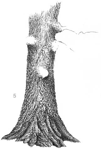 learn to draw trees, pen and ink landscape demo