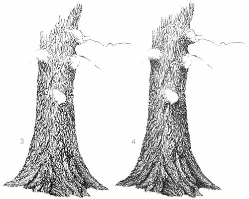 oak tree, drawing oak trees, how to draw an oak