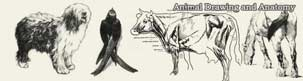 animal drawing and anatomy