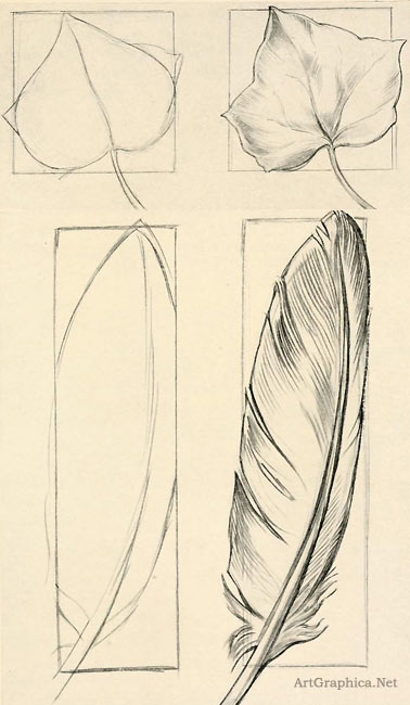 feather, ivy, leaf, drawing objects, beginner art lessons