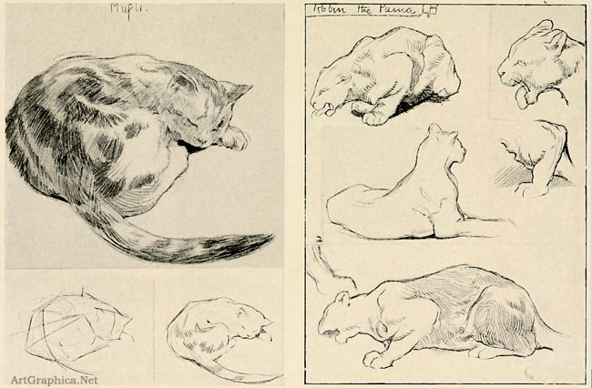 beginner guide to drawing animals
