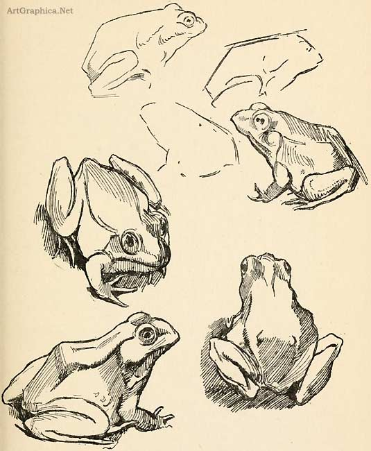 how to draw frogs