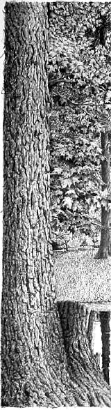 indenting, tree bark texture