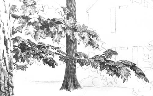 how to draw foliage, vincent whitehead