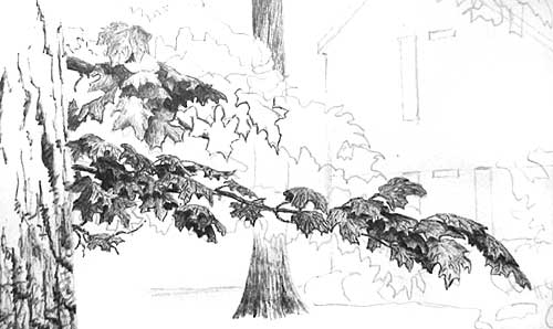pen and ink lesson, tree
