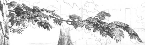 learn to draw leaves, leaves and trees, tree art