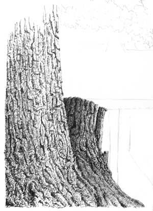 tree texture, ink and pen