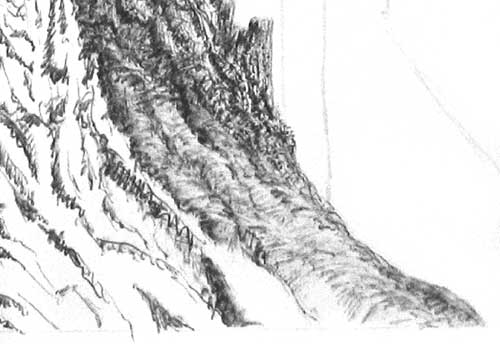 base of a tree from a pen and ink lesson