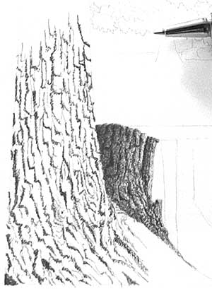 bark, trees, ink drawing