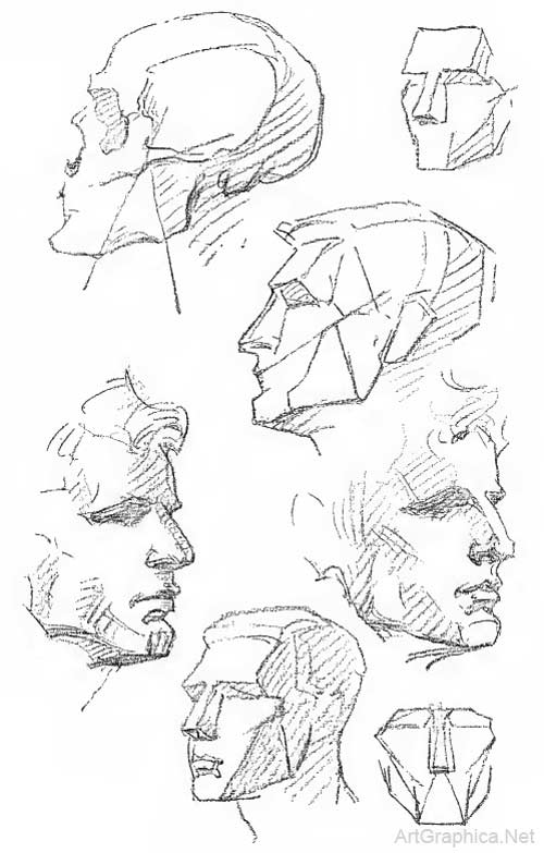 Drawing The Human Head Anatomy Art Tutorial
