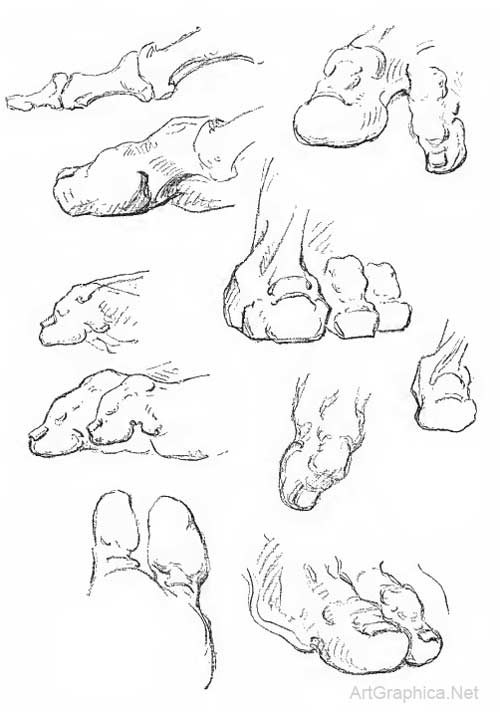 drawing toes