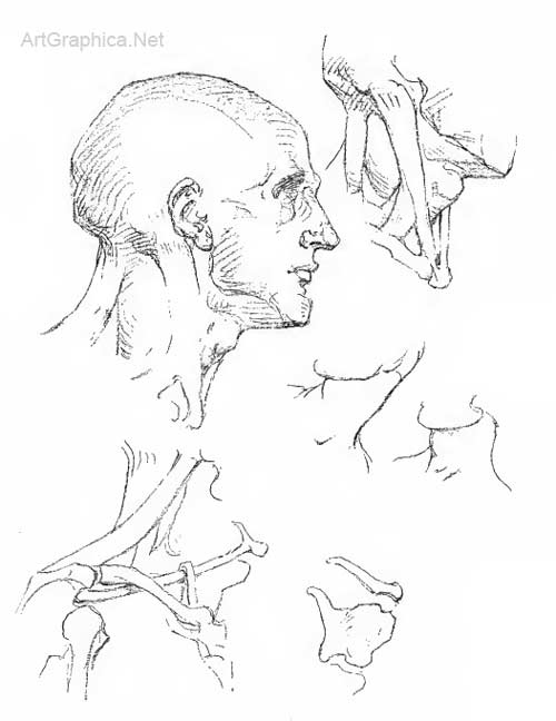 human head and neck, art lessons