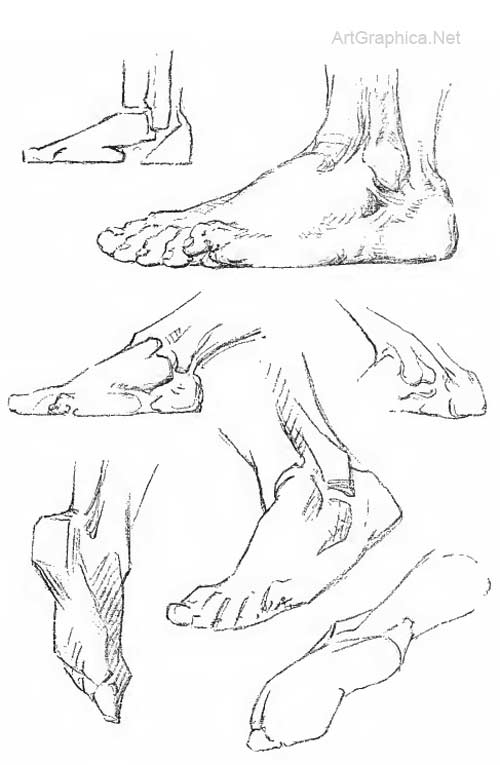 drawing the foot, foot anatomy and art