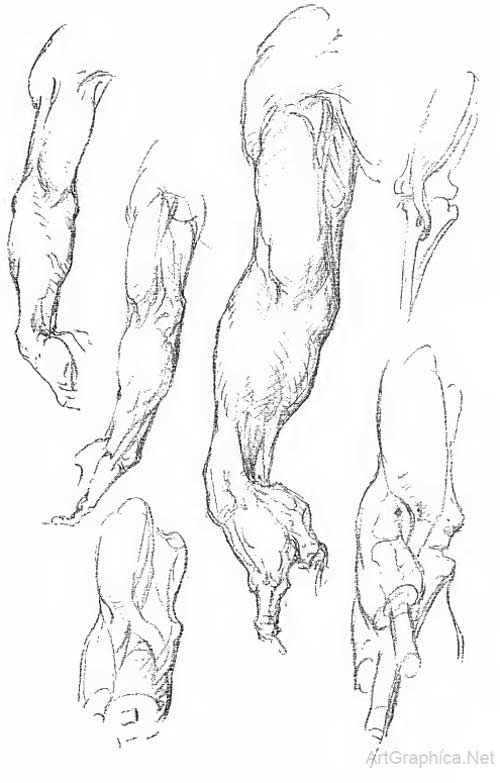 Anatomy of the arm, George Bridgman art book
