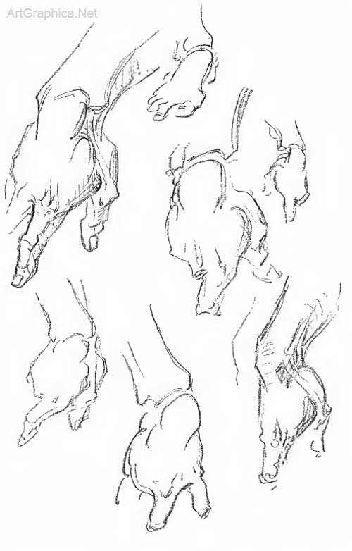 hand studies, anatomy of hands for artists