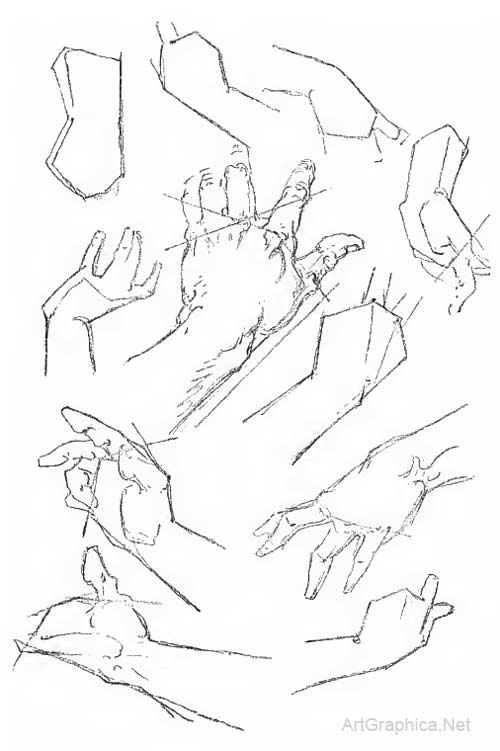 Anatomy of the hand, and how to draw hands by George Bridgman