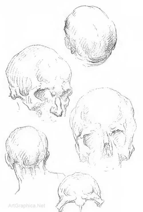 Drawing the human head, anatomy art tutorial