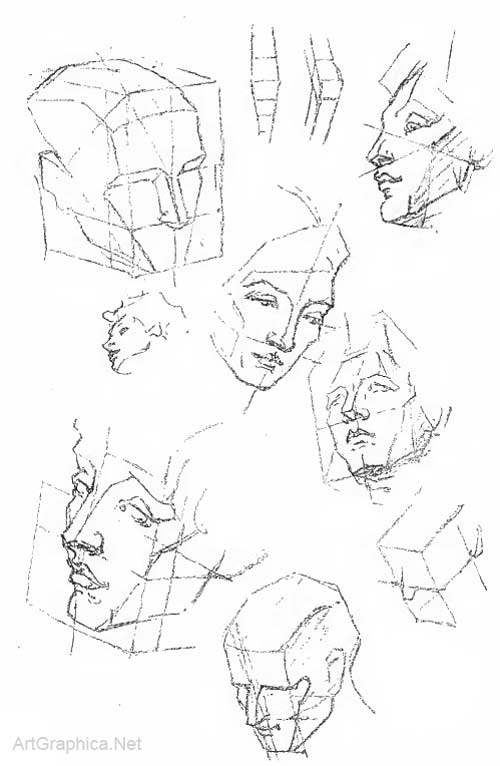 Drawing The Human Head Anatomy Art Tutorial