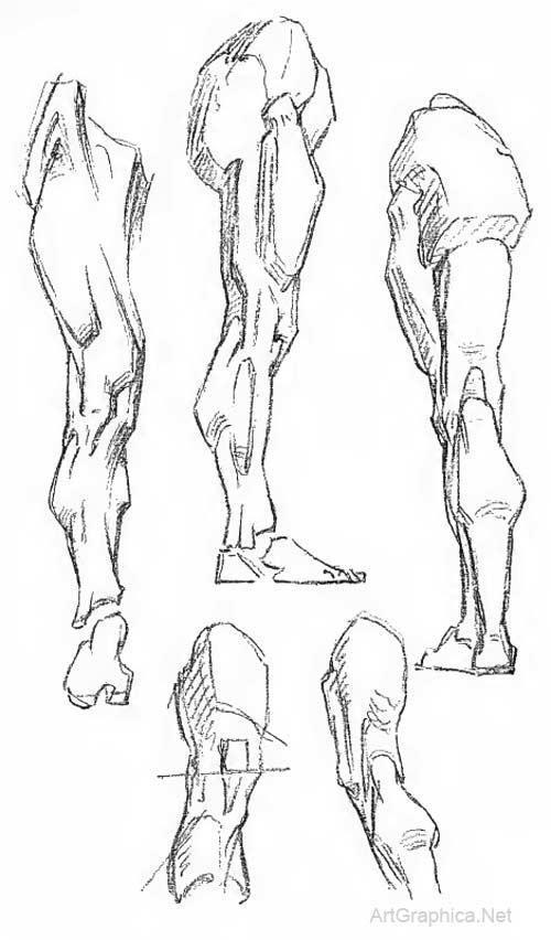 The Leg, Constructive Anatomy by George Bridgman free art lesson