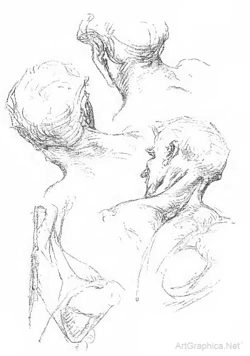 drawing the neck, neck muscles, neck anatomy