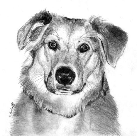 how to draw a dog, graphite art lesson