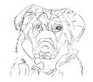 dog drawing, outline