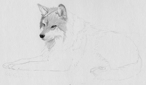 Line Drawing Fox : How to draw fur free pencil tutorial
