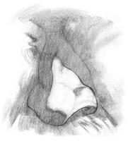 desenho do nariz