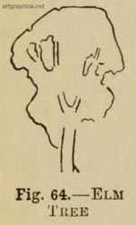 elm tree illustration, drawing elm trees