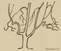 drawing tree branches